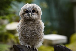 owl-2307405_1920